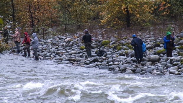 A group of anglers on the banks of the lower Capilano River Thursday afternoon.