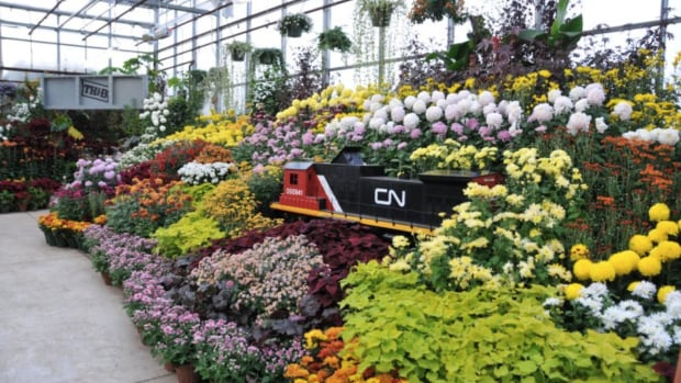 The Hamilton Fall Garden and Mum Show starts Friday and runs until Oct. 29.
