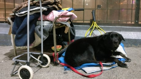 'No pets allowed': B.C. group rallies for legislative change for renters