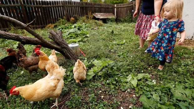 Iolana Keith, of Des Moines, Iowa, feeds chickens in the backyard with her mom, Tanya Keith, in September. The family collects eggs but takes care not to be too affectionate with birds.