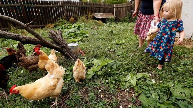 Backyard Flocks Illnesses