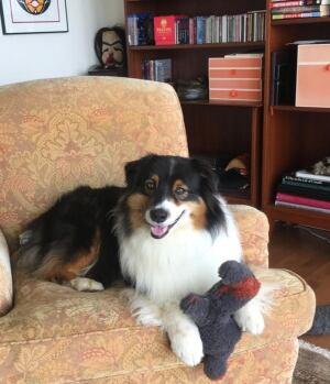 David Peachey's dog