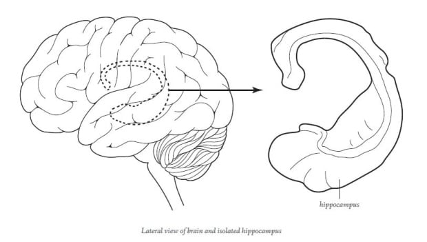 Lateral view of brain and isolated hippocampus