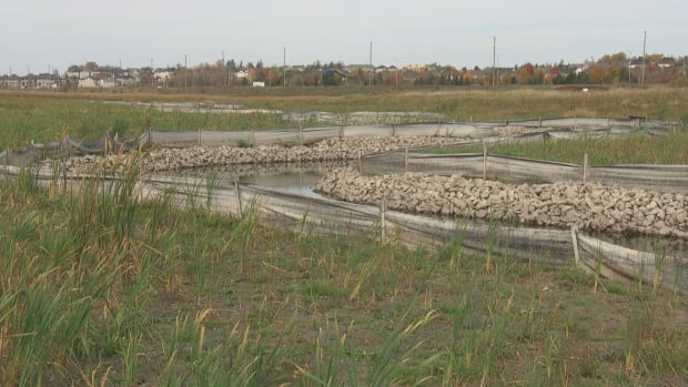 Carp River restoration construction