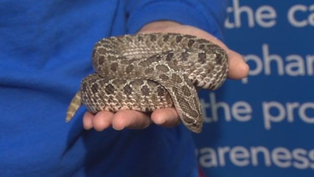 Tiffany Lui holds Hognose snake