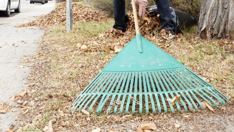 Skip raking your leaves — for nature's sake