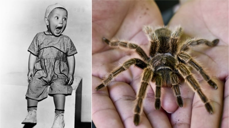 are humans hardwired to fear snakes and spiders according to babies