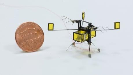 bee-robot