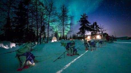 churchill sled dogs