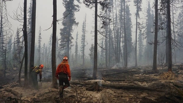 B.C. experienced its worst wildfire season in recorded history this past summer.