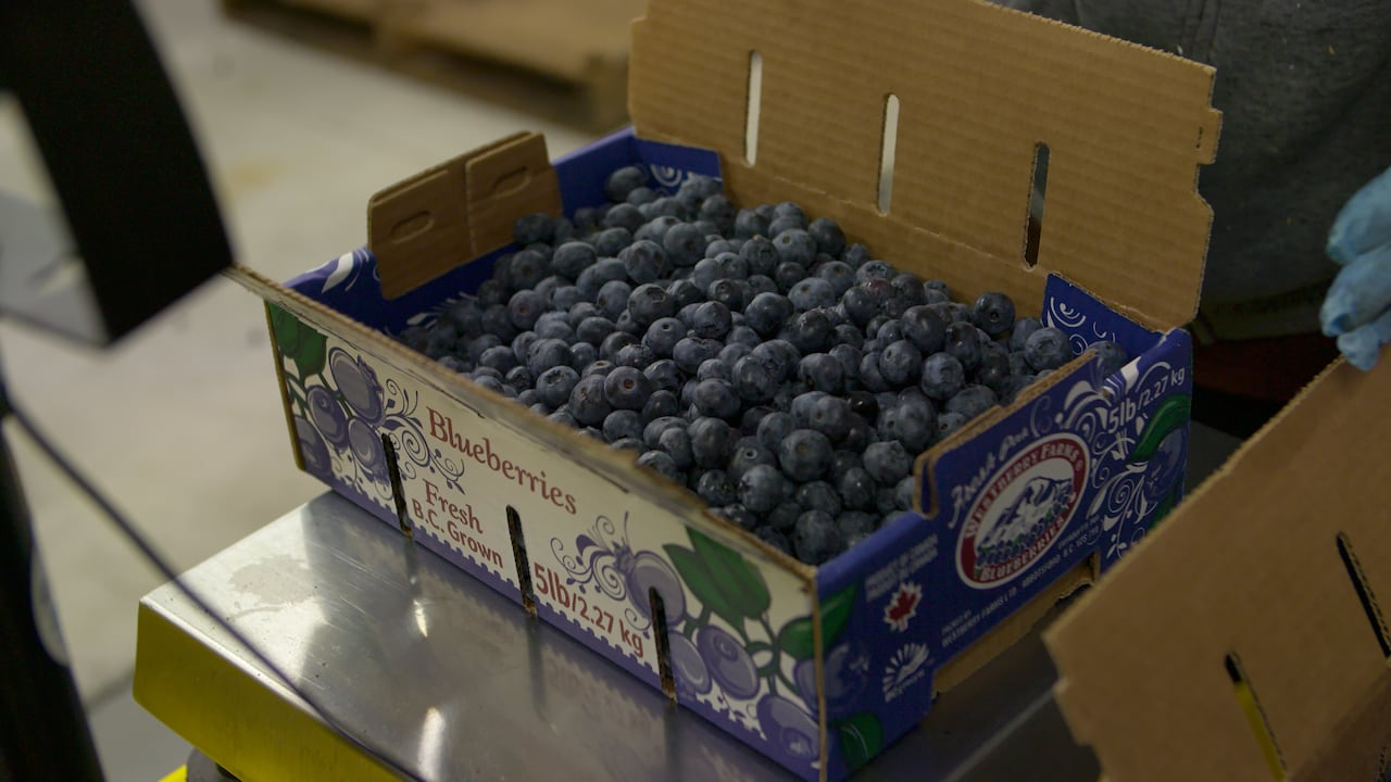 Abbotsford cultivated blueberries, the top Canadian fruit