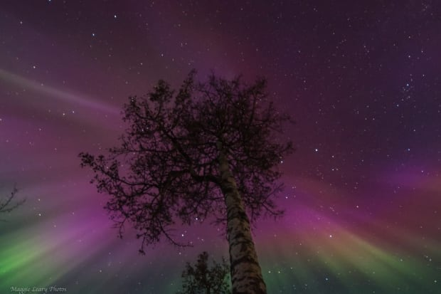 Northern Lights in Whitehorse