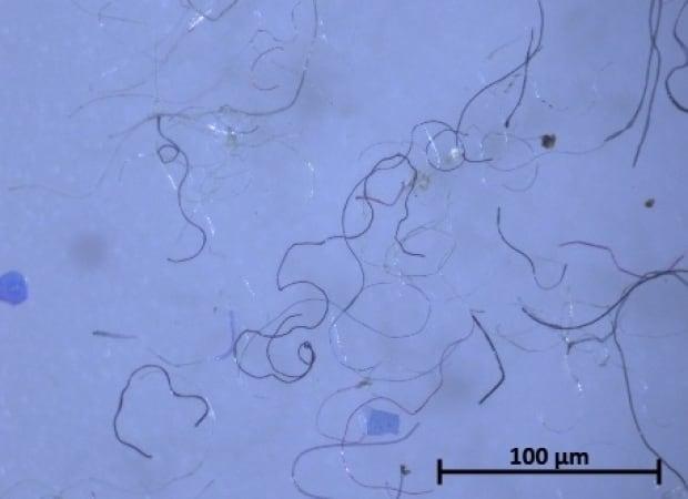 microplastics Saint John river