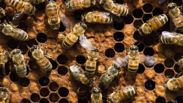 The stolen honey bees were never recovered even after the man responsible was arrested and sentenced.