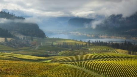 DRAW-ma or DRA-ma: Is there an Okanagan accent?