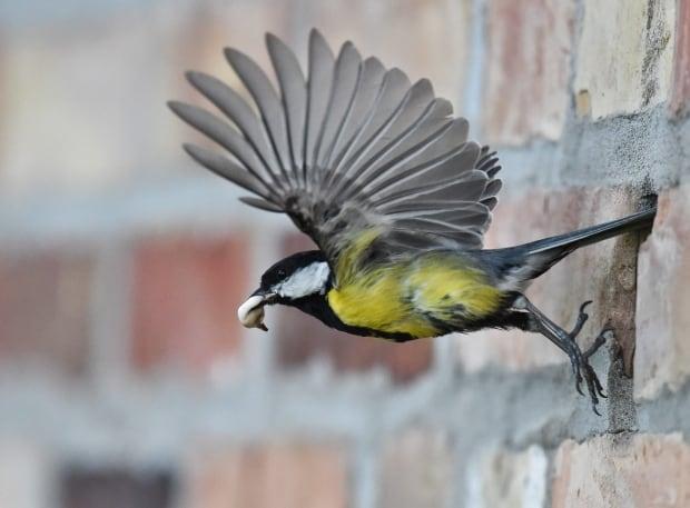 Germany Bird