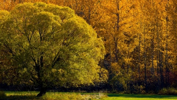 Local photographer Jim Brompton shot this photo near Kelowna.