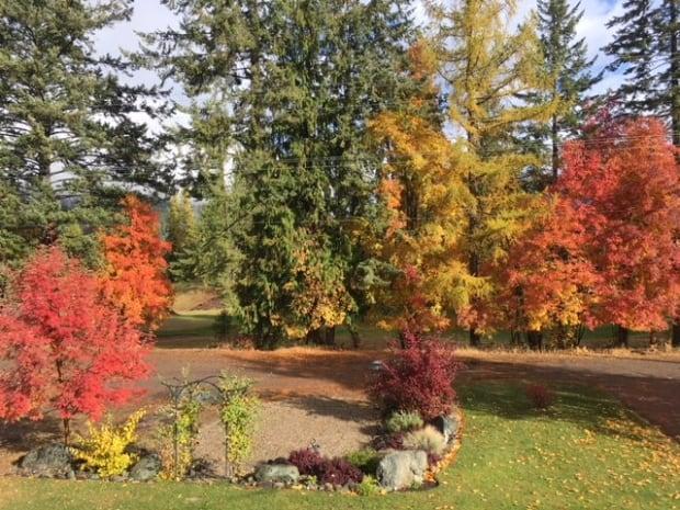 Kaslo fall colours