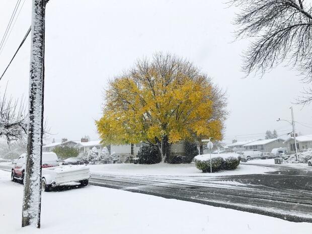 Winter maple tree Kamloops