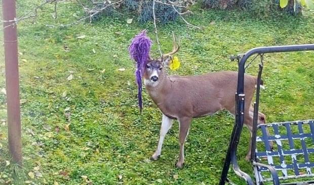 Hammy the Deer