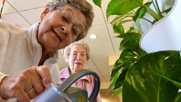 Inez Gallant, left, and Joyce MacSweyn tend the plants in the new living wall in the dementia household at Summerset Manor in Summerside, P.E.I. The pilot project was installed by Atlantic Green Contractors.