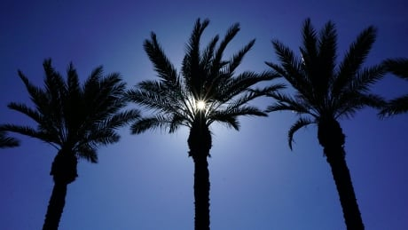 Warmer climate sees palm trees growing where they haven't before: U of S researcher thumbnail