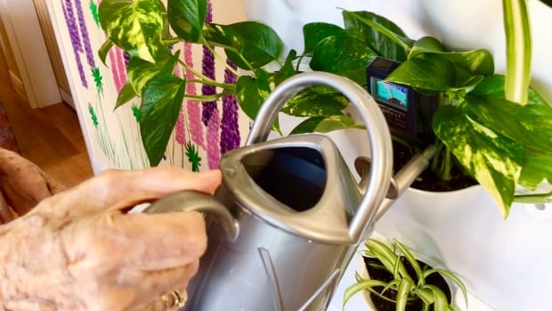 Don't overwater your plants, advises Brian Minter.