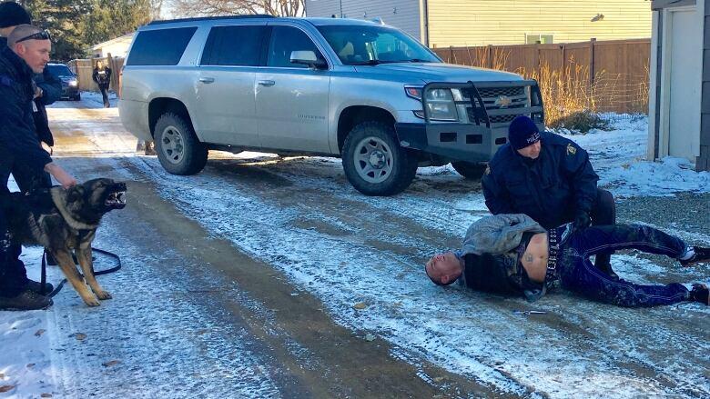 Wild ride in stolen lumber truck ends with dog bites near Kamloop