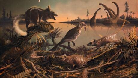 Rat human ancestors