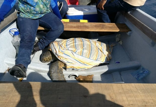 El Salvador's ministry of environment (MARN) has collected samples from the dead and dying turtles and will determine whether toxins are to blame. (MARN El Salvador/Twitter)