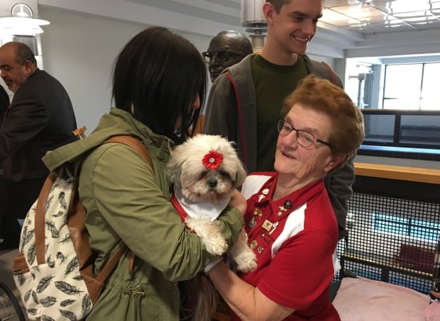 Angel the therapy dog