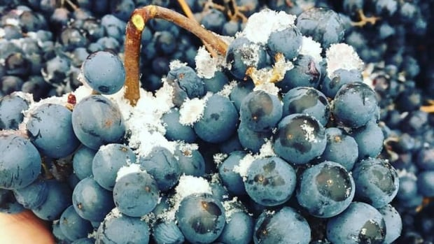 This season is being described as 'a stunning year' for ice wine, but the early snow could potentially damage the vines, says Erik von Krosigk.