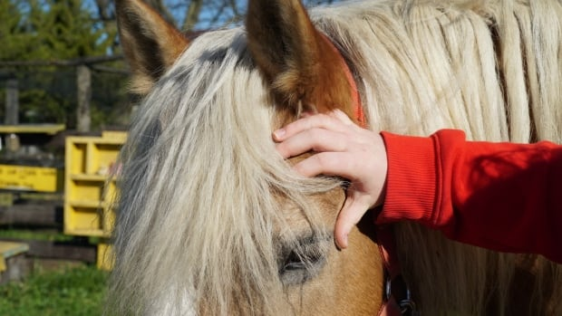 A 16-year-old victim of sex trafficking pets a horse at Farmtown Canada.