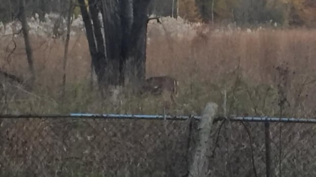This photo, said to depict a wounded deer at the Ojibway Nature Reserve, was posted on Facebook Tuesday.