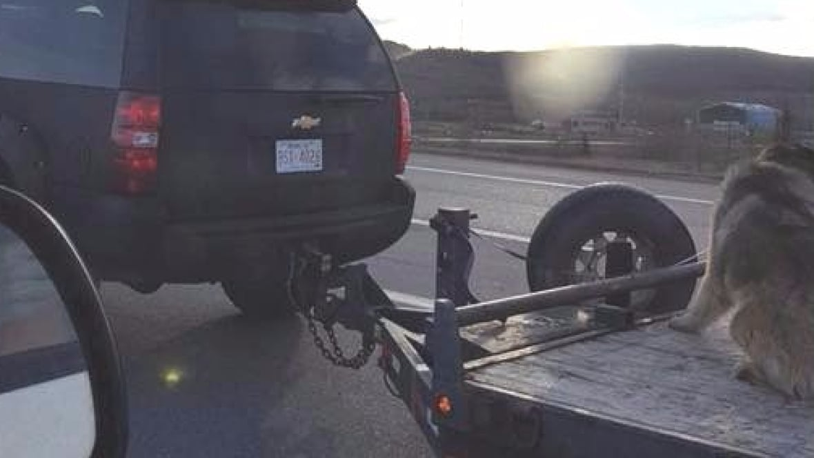 Man charged by humane society after dog transported on open flatbed trailer