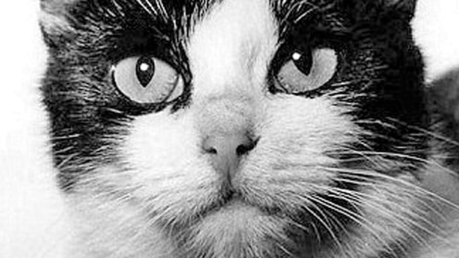 In 1963, Félicette the French feline became the first cat in space.