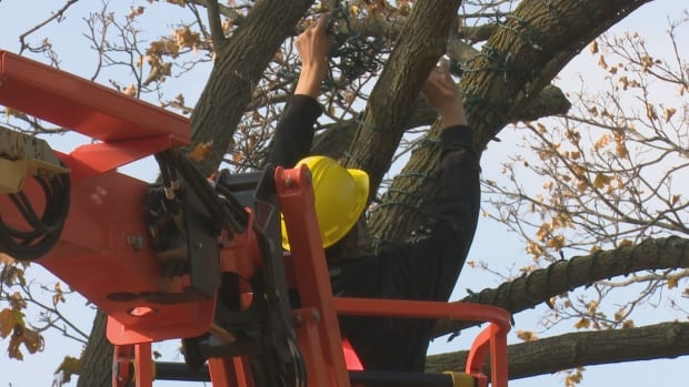 A worker with Garlatti Landscaping strings lights on a tree in Jackson park. About 58 trees will be wrapped in lights like this one.