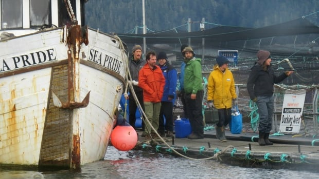 Fish farm protesters vacate Marine Harvest's Midsummer Island farm in response to the company's application for an injunction in November 2017.