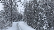 Yellowknife snowy trail