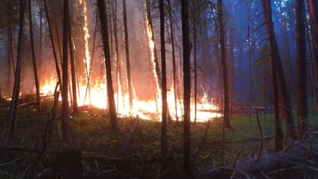 Thinning the forests could change wildfire patterns, forest manager says