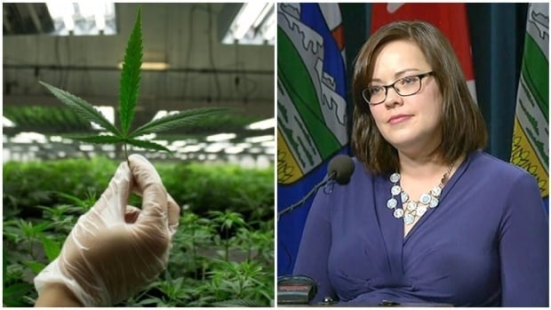 The Alberta Gaming and Liquor Commission will be in charge of obtaining and distributing legal cannabis to private retailers similar in the way it handles alcohol, said Justice Minister Kathleen Ganley.