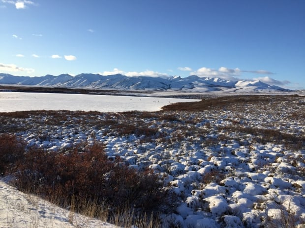 Caribou in the distance