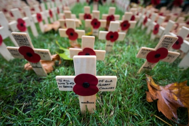 Remembrance Day crosses and poppies row on row
