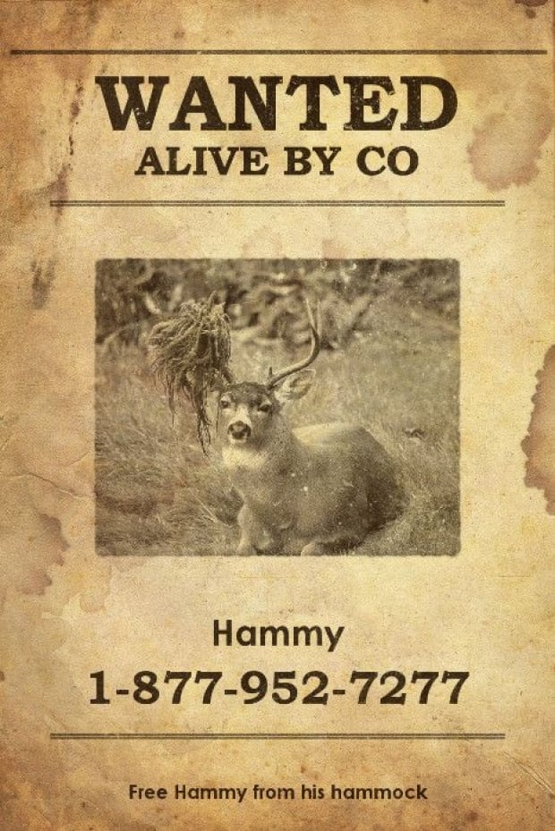 Hammy - wanted