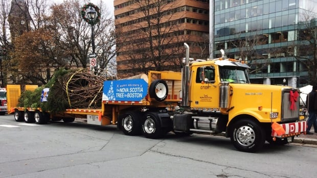 The 16-metre white spruce is destined for Boston.