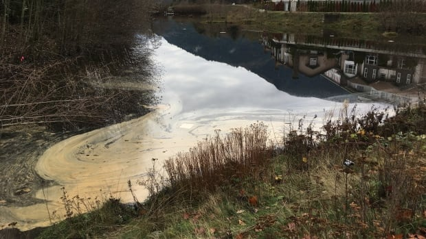 Contaminants sit on the surface of a storm water management pond in Squamish, B.C. Efforts are underway to clean up a diesel spill, believed to have originated at an underground tank in the district's downtown.