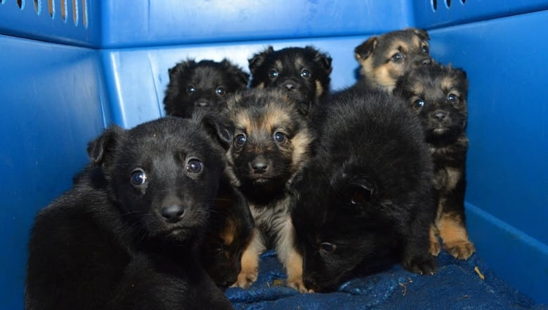 Not a case of neglect': 48 puppies, dogs rescued from