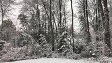 snow ottawa snowfall november 2017 trees winter weather