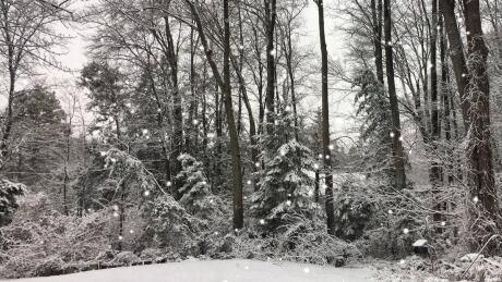 Ottawa's first snowfall of the season — as you saw it
