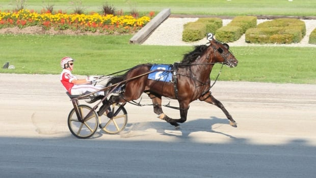 Somebeachsomewhere is seen winning the Confederation Cup at Flamboro Downs in Ontario in 2008.